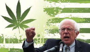 Bernie's Cannabis Plan